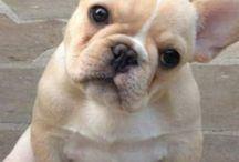 Puppy's love