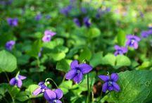 fiori piante semi e non solo