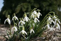 Think Spring / At Flowerland our favorite season is Spring! When the snow recedes and the sprouts come up to play!