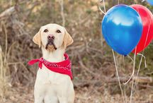 Dog Birthday Ideas / How to spoil your pooch for it's birthday ! Dog friendly cake recipes.