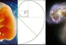 fibonacci / by Dani Violeta