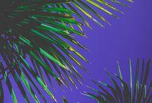 Palmz