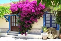 Bougainvillea Reference / Information about the different types of bougainvillea, how to grow, and look after it. Sketches and Paintings of Aegean and Med. inspired art. And inspiration for painting and sketching bougainvillea.