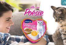 Poesie / Squisitezze per gatti!