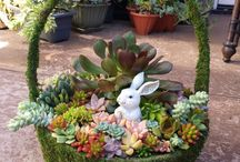 succulent easter gifts