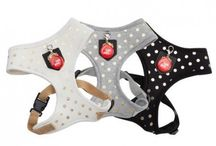 Accessorize me / Collars, leads, harnesses and any gorgeous accessories for the pooch on trend.
