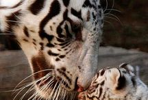 Beby animals