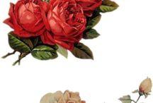 I Love Roses<3
