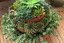 kaktusy, sukulenty a bonsae