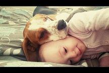 Amo Beagle