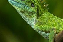 Reptiles / by David Aguirre
