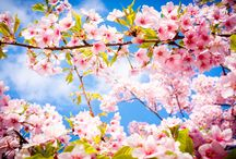 Spring / Primavera / Sceneries that bring your spirit to life from the wonderful spring season