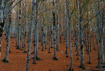 Forest, Gustav Klimt