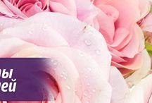 KOLKHIDA.COM / Flowers and gifts