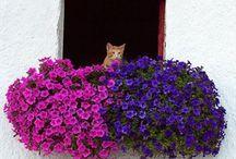 Gatos e Flores / Você acha que gatos e flores combinam? Nós temos certeza que sim. O que não combina com nada é gato abandonado, vocês não acham? #primaveragarden #flores #gatos #floricultura #adoteumgato