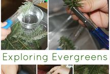 Evergreens / learning ideas on the topic of evergreens