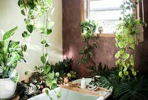 Bathroom / Plant world home dreams