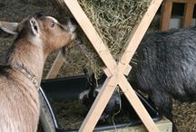 Mineral and Hay Feeders / feed Ideas along with mineral feeders