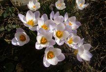 Moje kvetinky / o kvetoch ktore pestujem v byte i  záhrade