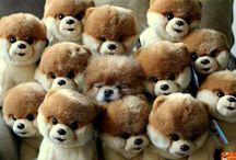 Alexandra Lima cachorrinhos fofos