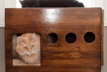 Cat love / by Andrea Leiferman