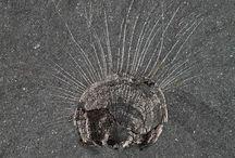 Fossils - Cambrium