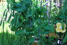 Garden in the PNW