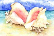 shell inspiration