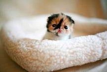 Cute is an understatement!!