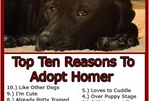 PET ADOPTIONS / Adopt, don't buy pets. Millions of cats, dogs, bunnies, reptiles, and amphibians need a home as a result of abondonment, abuse and neglect of their previous owners.