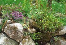 Vadvirágos kertek