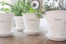 Gardening / Annuals, Perennials, Biennials, & Anything that Grows