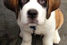 puppy.!