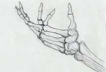 Skeleton Hand and Arm
