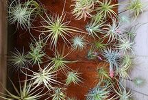 NTRLK AIRPLANTS / DESIGNS AND INSPIRATION