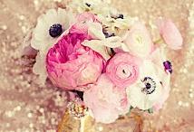 Flowers / by Jamie Howell