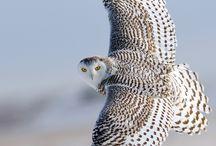 fauna BIRD OWL
