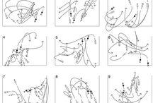 choreography notation