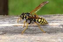 Yellow Jacket / Yellow jacket is the name of several fictional characters appearing in comic books published by Marvel Comics.