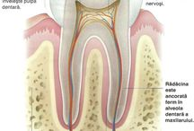 Dentists / General stuff you should know