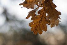 Autumn project / Own photos