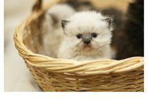 Cats soooo cute