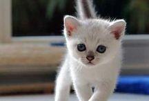 Kitty  / by Lindsay O'Morrow