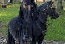horse equipement