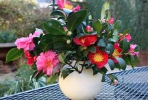 Garden Arrangements / When your garden gives you bounties of blooms, you make lovely flower arrangements!