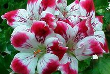 Petal faire wishlist / plants to come