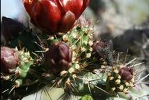 Desert Food-Arizona Eats / by Tanya Neill