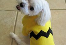 Wickedly Easy DIY Pet Costumes