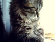 Cute Pets / by Janet Rollins