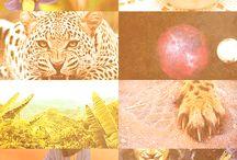 hunt to live//live to hunt || ja'vani//farkas
